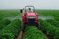 茨城県さつまいも畑の防除作業